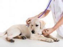 Punkty wypoczynkowe dla psów i kotów