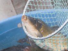 Ryby jadamy w grudniu