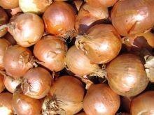 Sposób na więdnącą cebulę