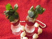Strawberry –kuszenie Dam :