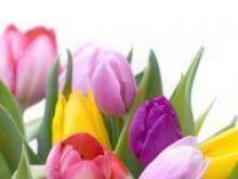 Symbolika kwiatów