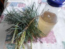 Syrop sosonowy z młodych pędów