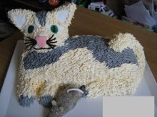 Tort Kot Gustaw