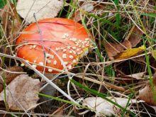 Uważaj na te grzyby!