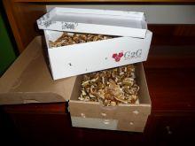W czym przechowywać grzyby?