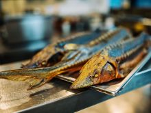 Jesiotr – kulinarne wyzwanie, rozkosz dla podniebienia