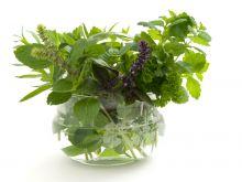 Werbena cytrynowa: pożyteczna, a mało znana roślina