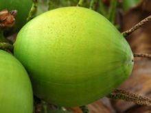 Woda kokosowa - czym jest woda kokosowa