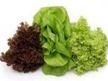 Wszystko o sałacie   -   warzywie z Chin