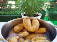 Ziemniaki na sałatkę