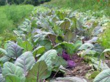 Zmniejsza się eksport polskich warzyw i owoców
