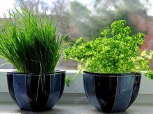 Zwiędniete zioła