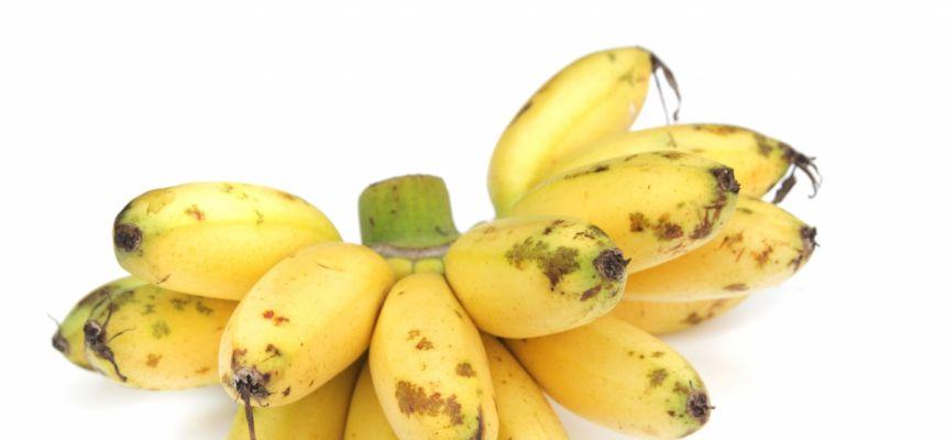 Lady Finger banana