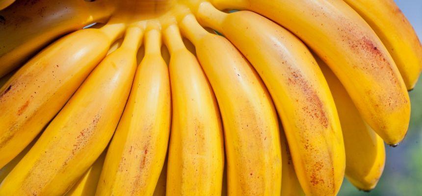Goldfinger banana