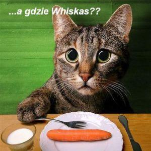 Renia (Kot w kuchni)
