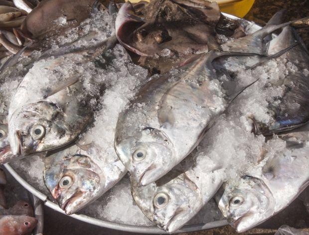 Co musisz wiedzieć o rybach?