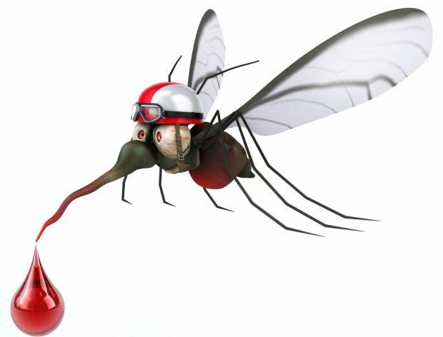 Co zrobić z jaj komarów?