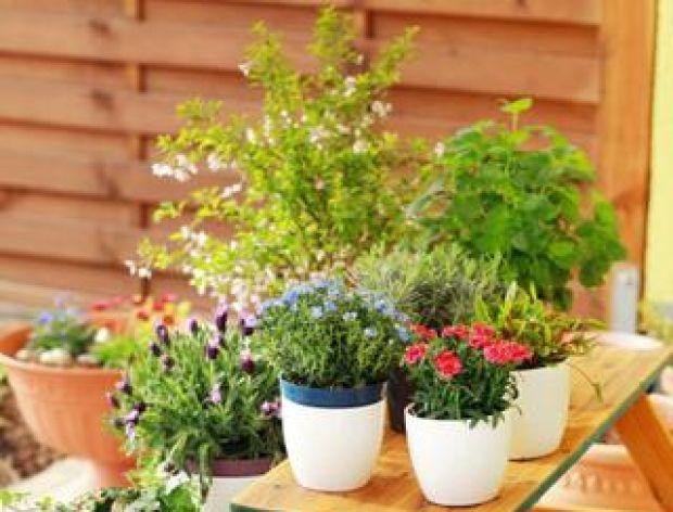 Dbamy o nasze rośliny doniczkowe.