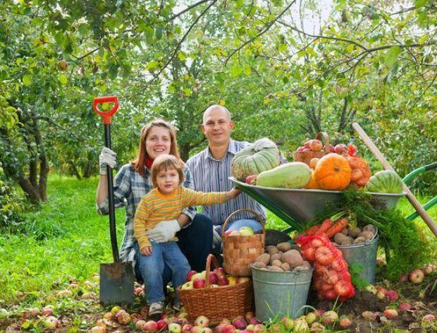 Dlaczego warto jeść sezonowe owoce i warzywa