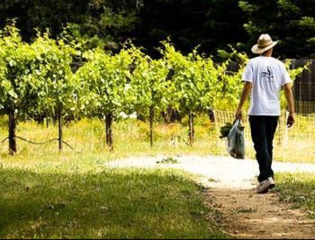 Festiwale winiarskie na Węgrzech wrzesień 2012