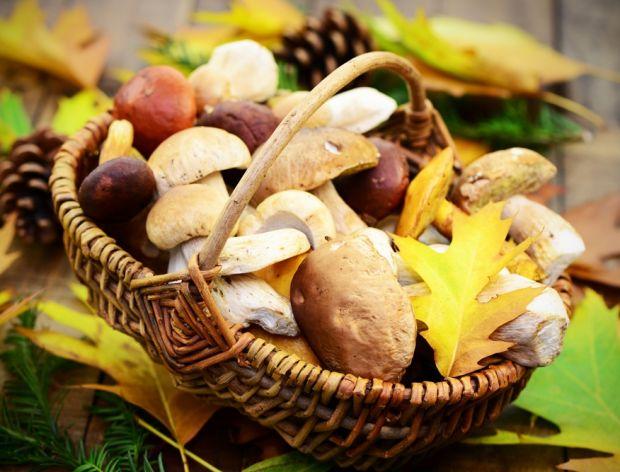 Znaczenie grzybów w diecie człowieka