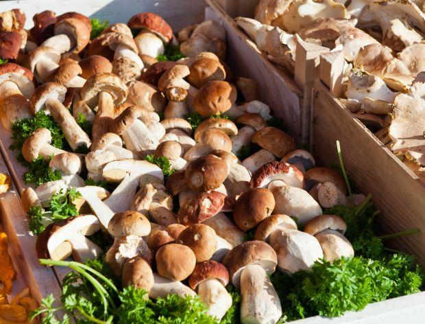 Gdzie nie wolno kupować grzybów?