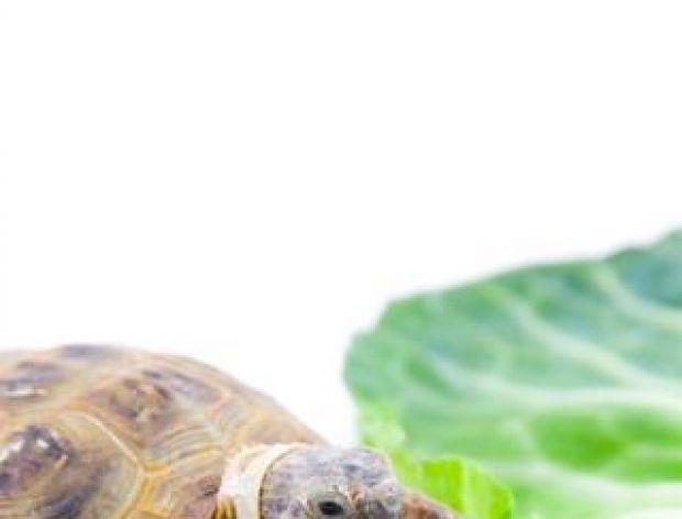 Idą dwa żółwie przez pustynię