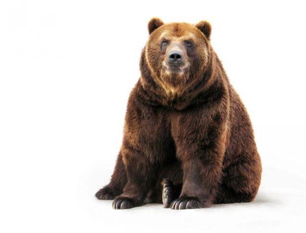 Idzie niedźwiedź przez las