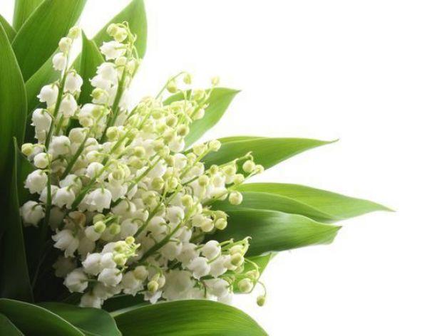 Ile kwiatków w maju