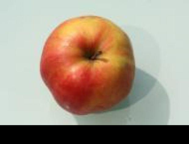 Jabłka Palikota