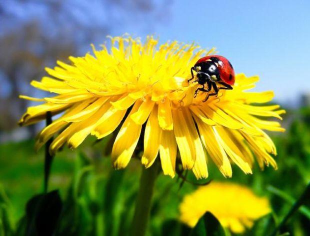 Jadalne kwiaty z Twojego ogrodu.