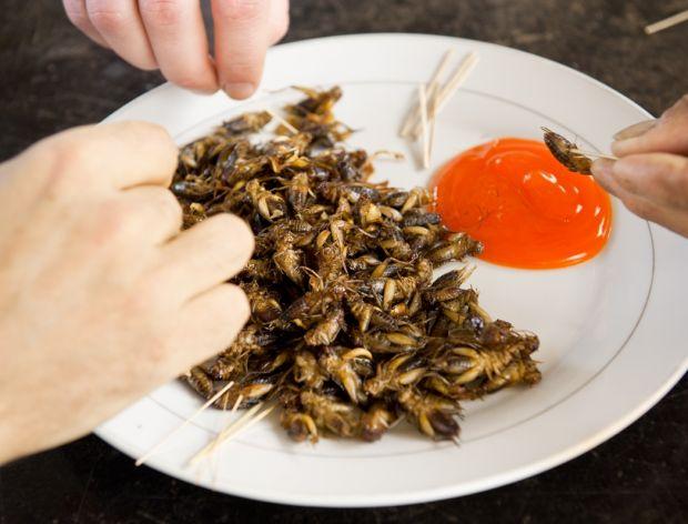 Jak smakują owady?