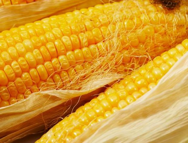 Kolba kukurydzy z grilla