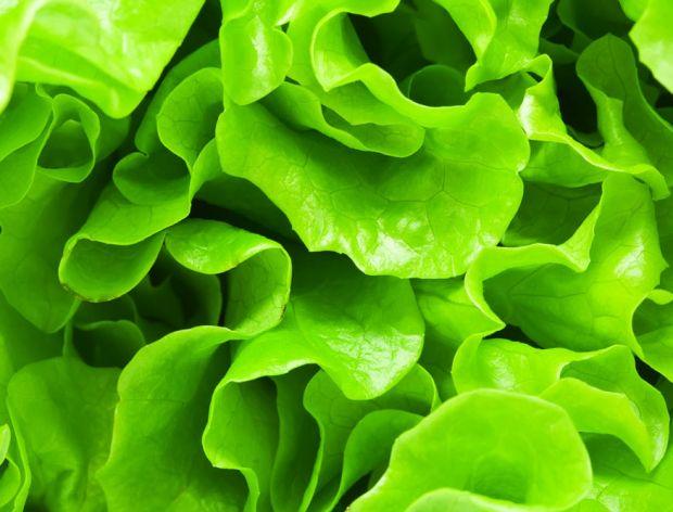 Sposoby przechowywania sałaty