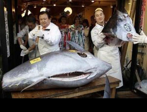 Najdroższy tuńczyk na świecie