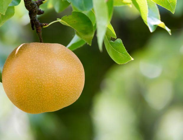 Nashi - owoc między gruszką a jabłkiem