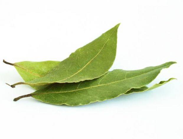 Ostrożnie z liściem laurowym