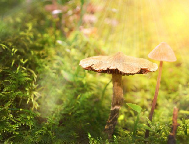 Pieniążki – niezwykłe grzyby