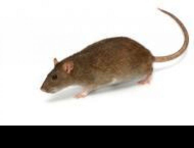 Przychodzi mysz do baru