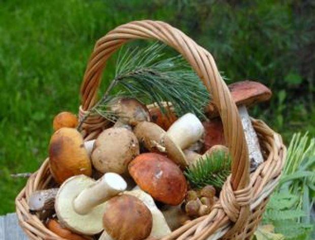 Przyprawa grzybowa własnej produkcji