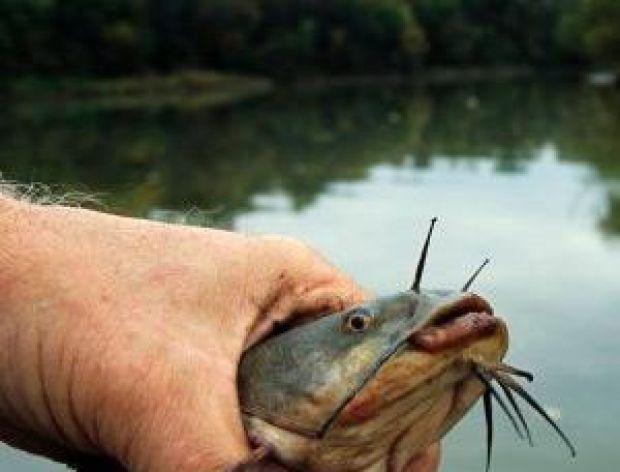 Rekord w łowieniu ryb
