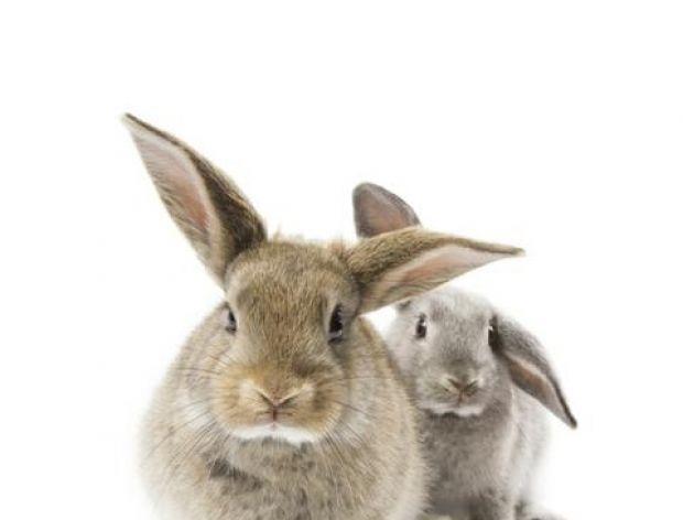 Rozkicanych królików...