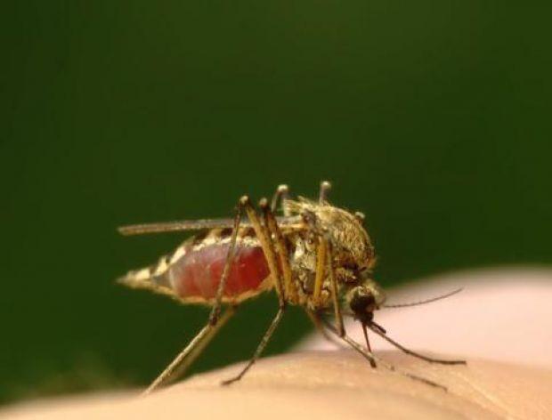 Skuteczne sposoby walki z komarami