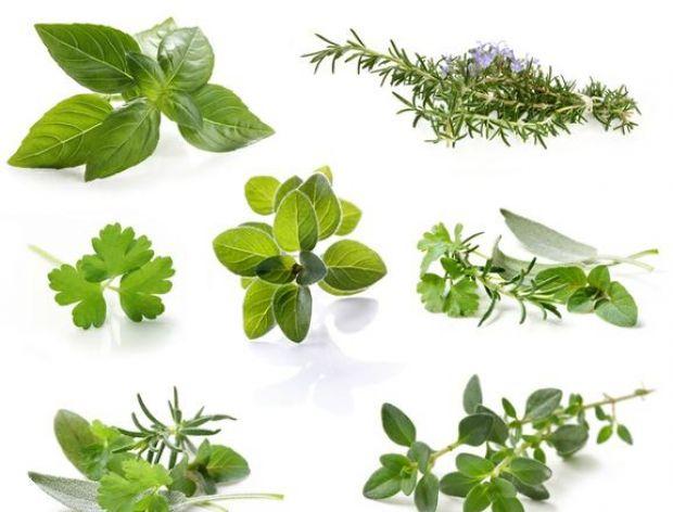 Świeże zioła – kiedy dodawać