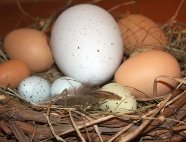 Szacujemy wiek jajek