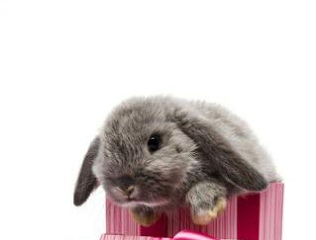 Wesołego królika, co po stole bryka!