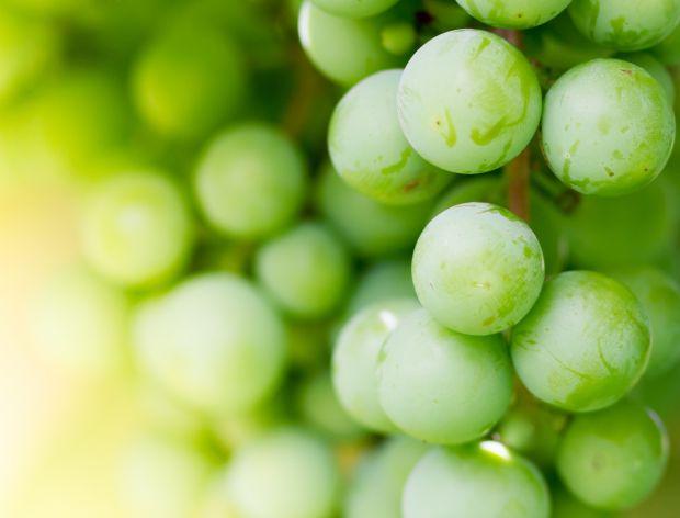 Białe winogrona - sposób na posiłek