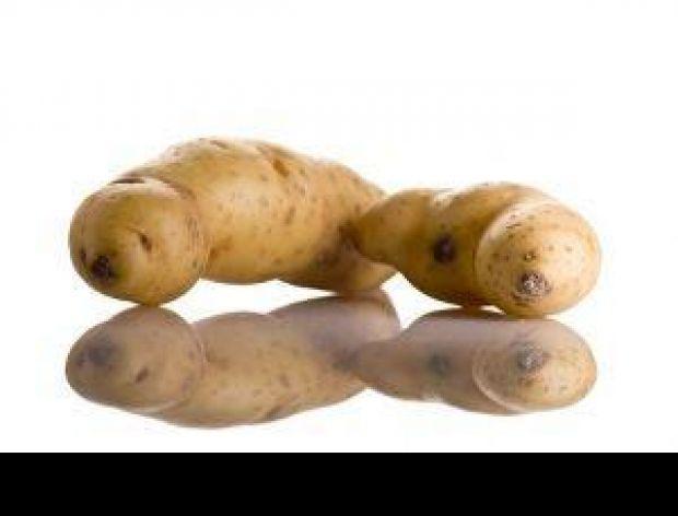 Wyhodowano ziemniaka odpornego na suszę!