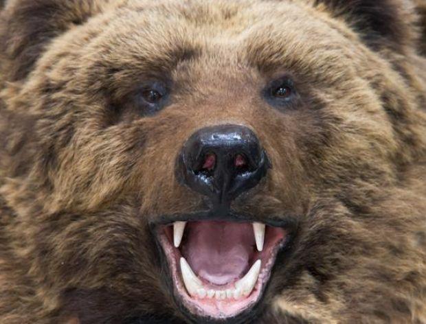 Zajączek i niedźwiedź jadą pociągiem