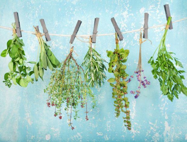 Zbieranie i suszenie ziół, czyli jak stworzyć naturalną apteczkę?